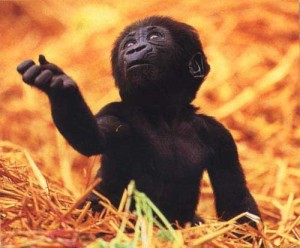 existential crisis chimp