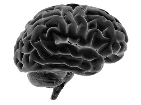 side brain-pic