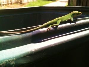 Garbage Gecko