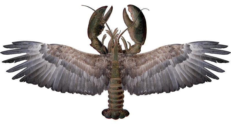 hawk-lobster